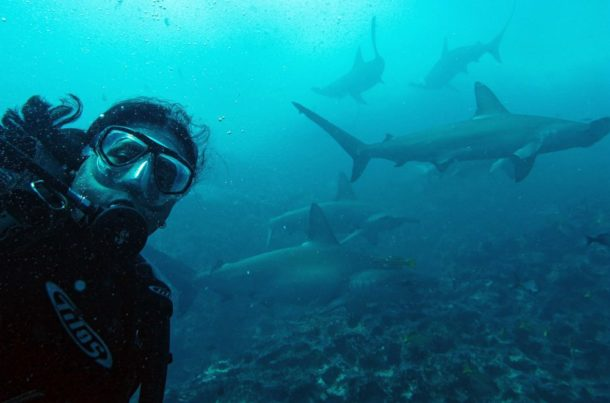 Diving Galapagos with hammerhead sharks
