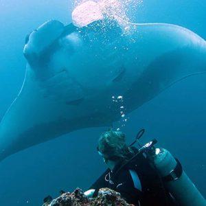 manta ray academy bay diving galapagos