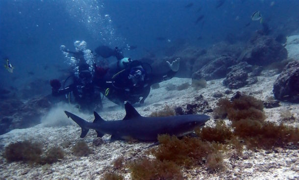 Introductory divers in Galapagos