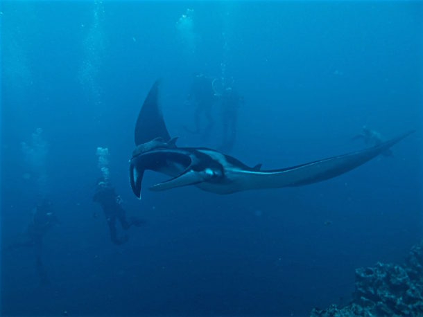 Diving with Manta academy b